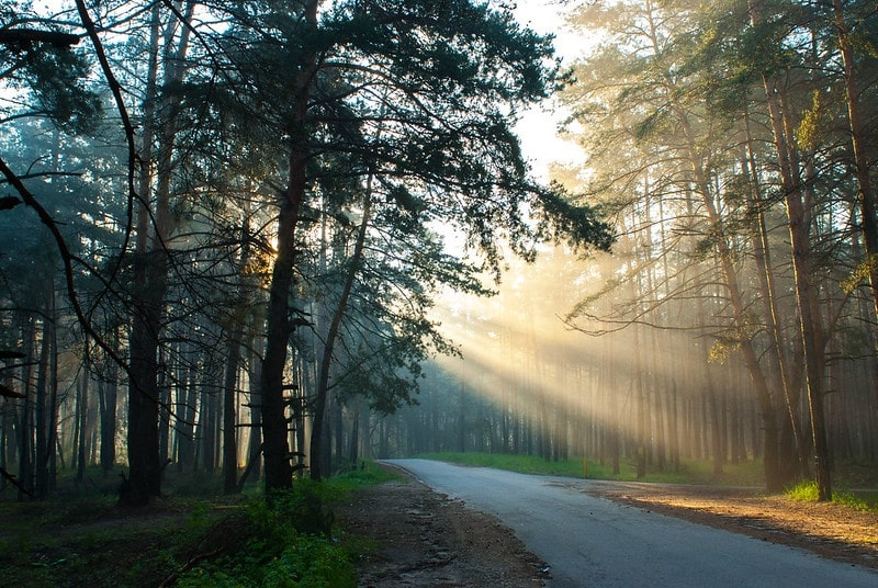 morning by Vadim ♦ PLAKHOFF